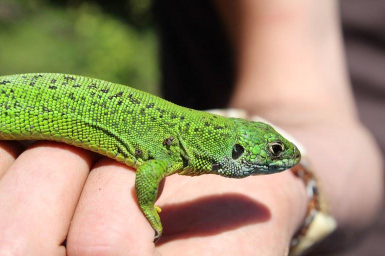 Recorrido para conocer los reptiles y anfibios del parque natural Aizkorri-Aratz en Arantzazu
